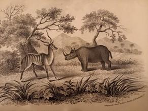 natural history paper