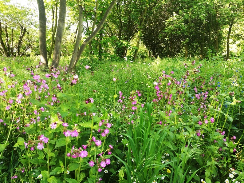 Leyton Jubilee Park Woodland Walk