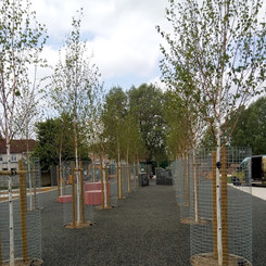 Cheney Row Park trees