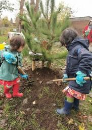 Pine tree planting November 2019