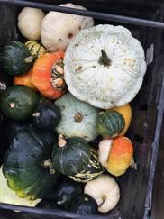 Lloyd Park Market squash and pumpkins
