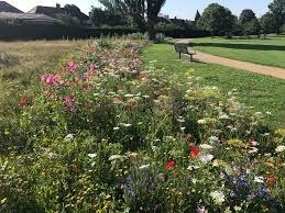 Higham Hill  Park wild flower corridor