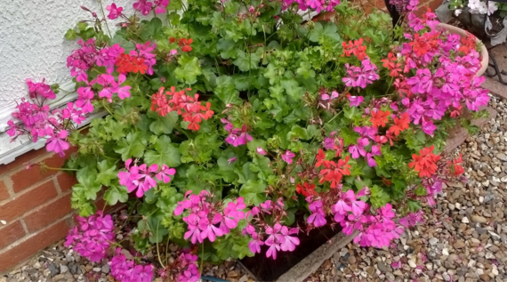 black box used to plant flowers