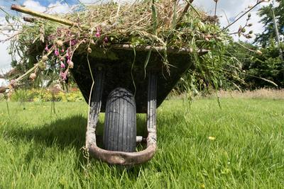 Garden waste in a wheelbarrow