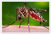 Zika Travel