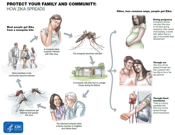 How Zika Spreads Fact Sheet
