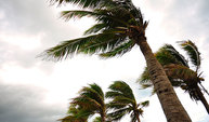 Photo of palm trees during a hurricane.