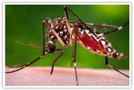 Zika Zone