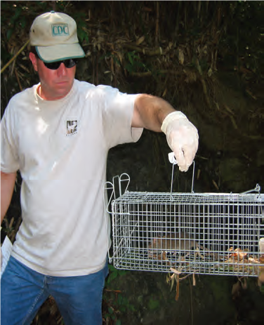 Man wearing glove and holding a rodent trap with a rat in it