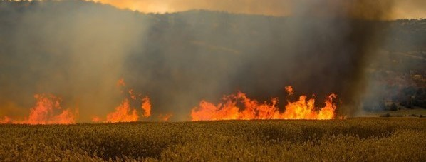 wildfire on a field with mountains in the background