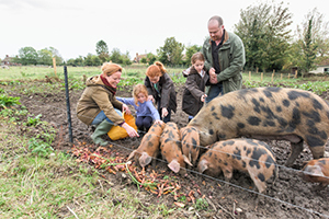 Children with pigs