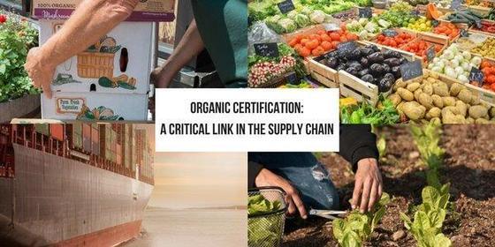 OC - Critical Link