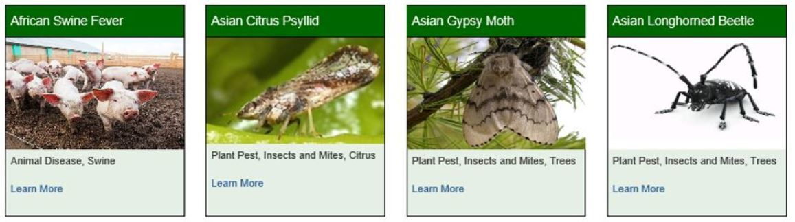 pests and disease collage