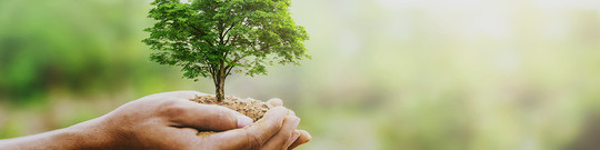 Protect Plants Against Invasive Plants