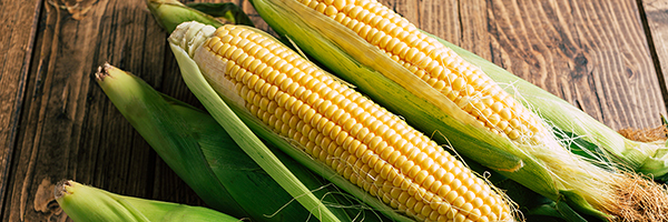 GE maize