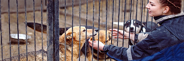 photo of a woman petting several dogs through a fence