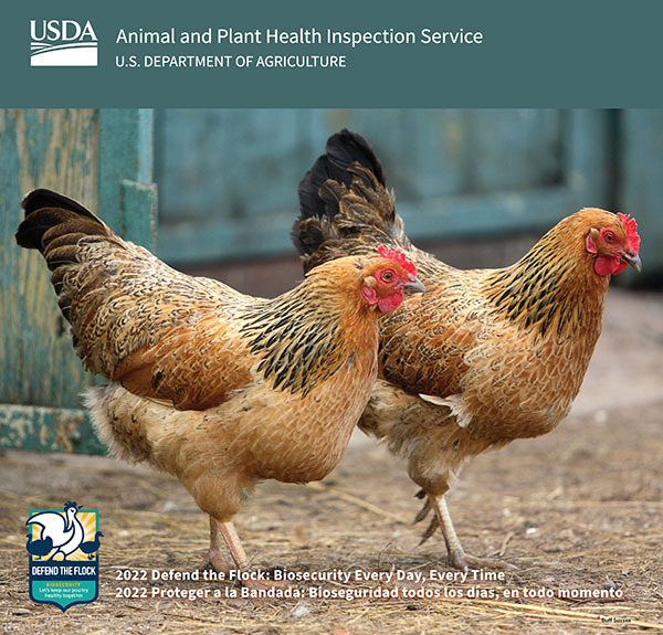 cover of 2022 Defend the Flock calendar showing two chickens