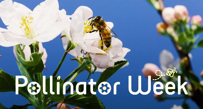 Pollinator Week banner