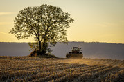 Image of a tree with a tractor fall seeding at a farm