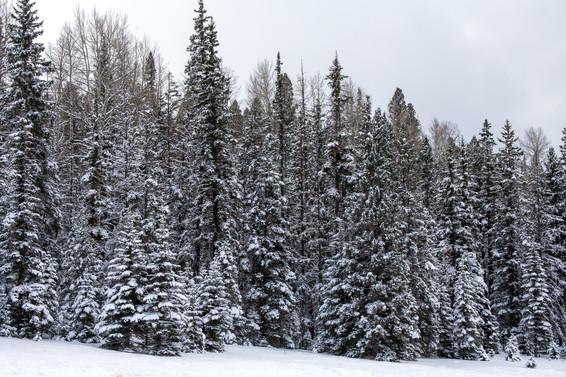 CIG winter newsletter
