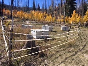 Bee hives at Stevens Creek on the Manti-La Sal National Forest