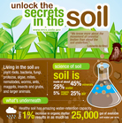 Soil Graphic