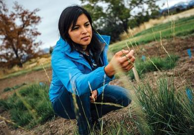 Audrey Harvey, Montana State University graduate student, makes observations on research plot of bluebunch wheatgrass.