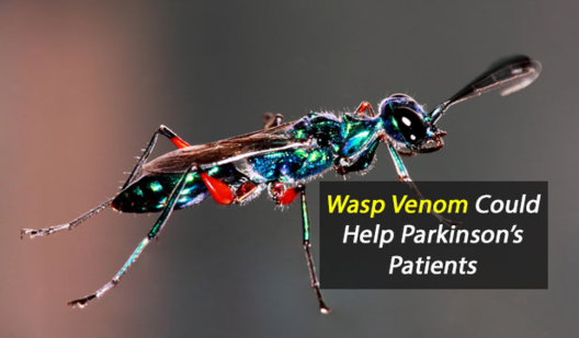 Mind controlling molecules from wasp venom could someday help parkinsons patients photo by Sharadpunita