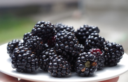 Blackberries image from Pixabay