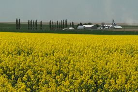 Canola farmstead in Washington State, photo by Ron Nichols, NRCS