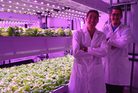 University of Arizona students work with vertical farming facility for research, education and outreach.