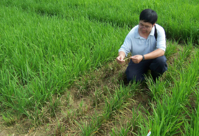 ARS plant pathologist Yulin Jia samples a field in Colombia for the disease.