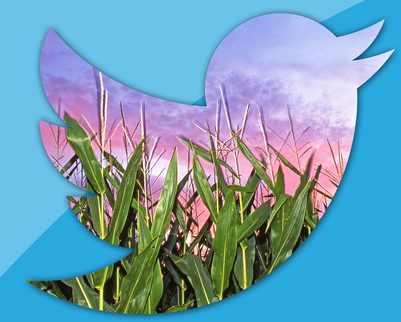 Twitter Corn Plant graphic