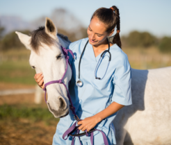 Female veterinarian with horse, image courtesy of Getty Images.