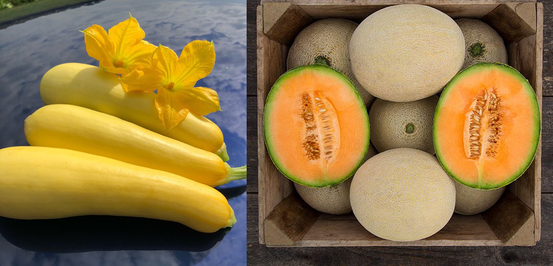 Smooth Criminal summer squash (left) and First Love melon (right). Photo courtesy: Seneca Vegetable Research and High Mowing Organic Seeds.