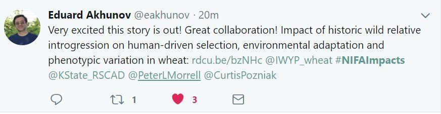 Akhunov KState Wheat Genome tweet