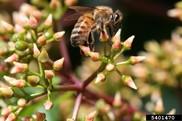 USDA NIFA Fresh From the Field. Pollinators.Photo Lesley Ingram, Bugwood.org