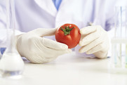 Examining a Tomato. USDA NIFA Fresh From the Field.