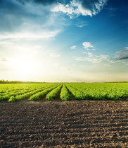 agricultural black and green fields and sunset in clouds - stock photo