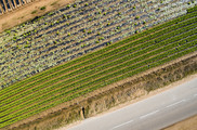 Aerial views of several fields of crops in a spring sunset. Getty Images.  USDA NIFA Fresh From the Field. NIFA Impacts.
