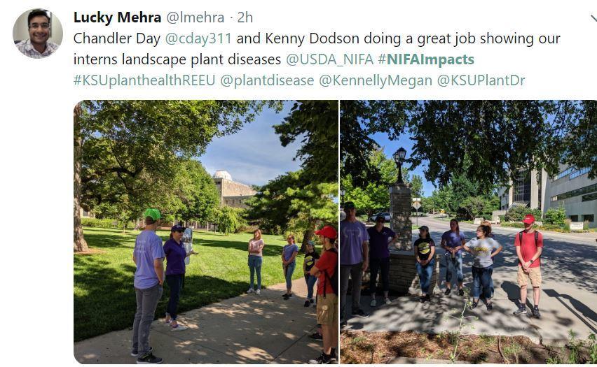 KSUplanthealthREEU. USDA NIFA Impacts. KSU. Lucky Mehra.