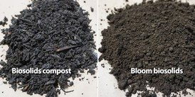 Biosolids compost shows the presence of woody material mixed in during the composting process. Photo courtesy of Odiney Alvarez-Campos.