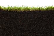 Cross section of grass and soil against white background. Getty Image. NIFA Impacts.
