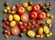 Various colorful tomatoes on grey kitchen table. Getty Images. USDA NIFA Impacts.