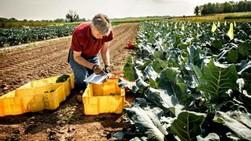 Thomas Björkman, professor of horticulture at Cornell University. Photo courtesy of Cornell University.