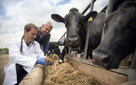 Rural Veterinarian, photo courtesy of Getty Images.