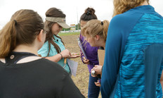 Student interns view examples of cotton seedling disease. Photo courtesy of G. Rowsey, courtesy UTIA.