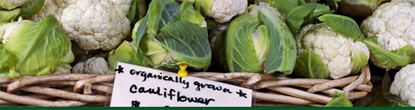Organic Agriculture Research and Extension Initiative. Image of cauliflower plants in a basket; courtesy of Getty Images.
