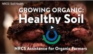 organic video