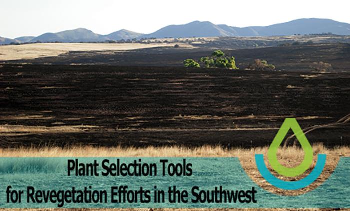 Southeastern Arizona landscape after fire